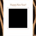 2014zebra1-orange