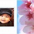 spring-sakura2-sample