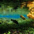 Photos: 湧玉池 水面下2