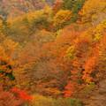 Photos: 色づく山肌