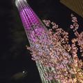 Photos: スカイツリーと桜 -Cybershot RX100-