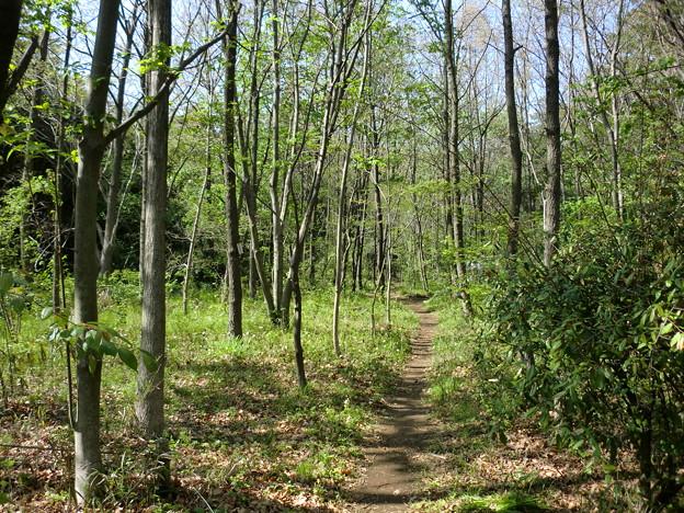 つるま自然の森(4月)