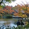 Photos: 昭和記念公園の紅葉