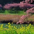 みなみの桜 (13) 南伊豆町下賀茂温泉