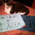 Photos: 本日の #ACTA 反対デ...