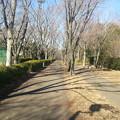 写真: 130126 尾根緑道