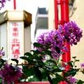 Photos: 中華街