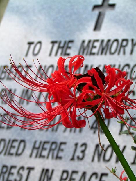 Photos: 外国人墓地