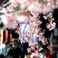 浅草寺~花やしき通り