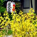 写真: 常栄寺(ぼたもち寺)