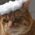 貴族の帽子