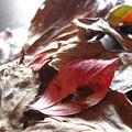 写真: 秋に染まる