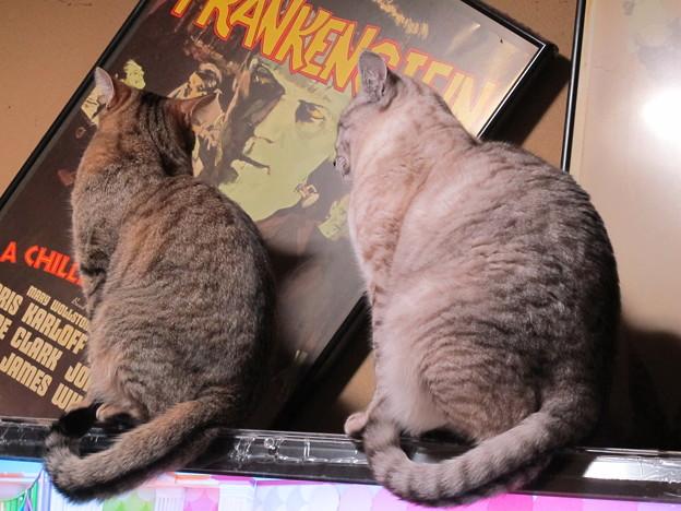 月姐「それにしてもフランケンがいつも曲がっているわねー」