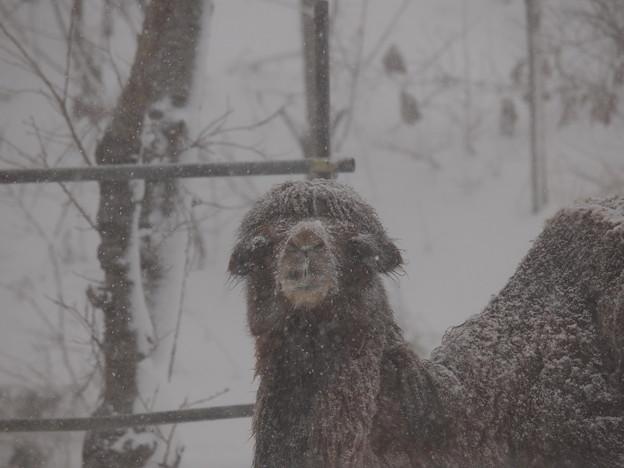 Photos: 雪国に生きる