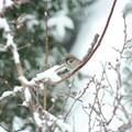 Photos: 積雪2度目