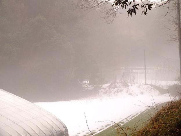 霧が立っています
