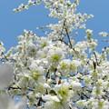 花の文化園2
