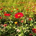 Photos: みなとみらいの花