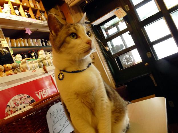 カフェ29猫(1)
