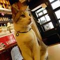Photos: カフェ29猫(1)