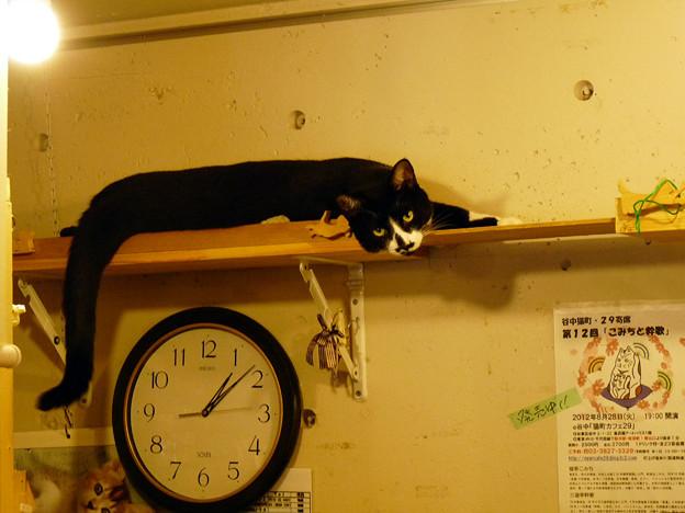 カフェ29猫(2)