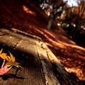 晩秋のベンチ