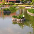 写真: 石橋文化公園