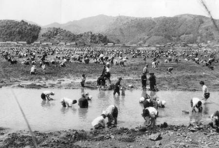櫛津貝掘り 1961-3
