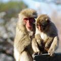 猿社会の勉強中~