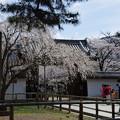 Photos: 写真00003 醍醐寺の総門