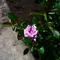 Photos: IMG_3787