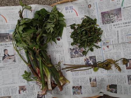 2013/04/30の収穫