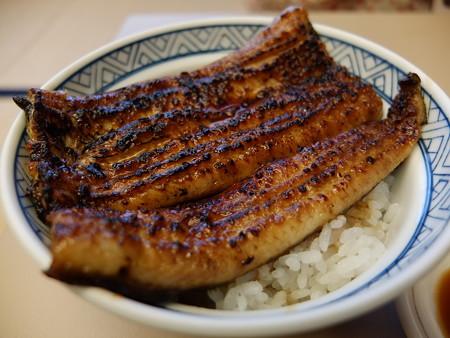 うなぎ専門店 本多 ウナギ丼 ¥2900