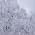 写真: 樹氷高原駅付近