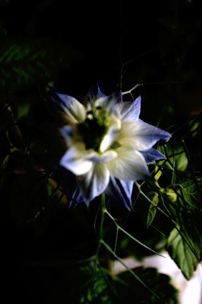 名も知らぬ花4