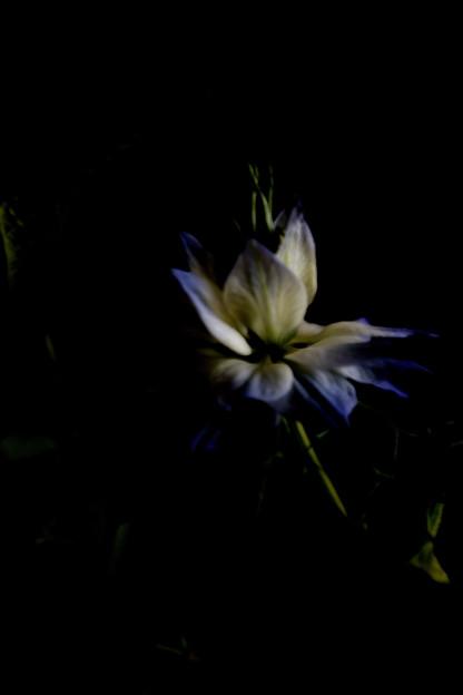 名も知らぬ花5