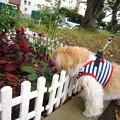 写真: 花壇眺めてます