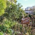 写真: 宝塚ガーデンフィールズ13122419