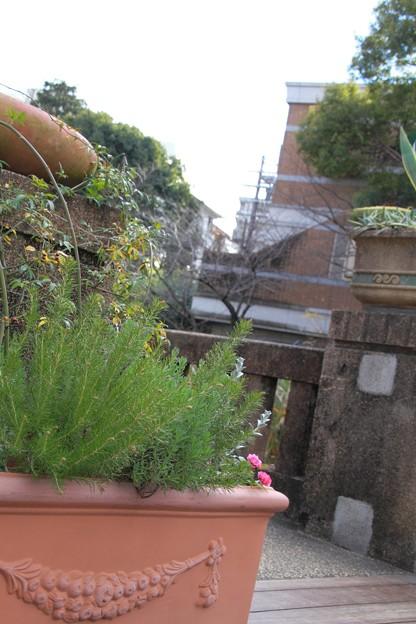 宝塚ガーデンフィールズ13122460