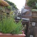 写真: 宝塚ガーデンフィールズ13122460