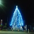 写真: アクト青山スタジオのツリー夜間ライトアップ