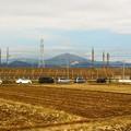 写真: 田圃