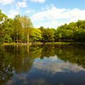 写真: 公園の朝
