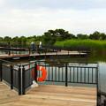 写真: 池の歩道