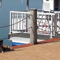 写真: 看板犬カイちゃん