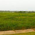 写真: 利根川下流