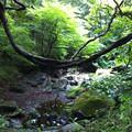 写真: 朝の森
