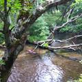 Photos: 赤い川