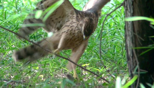 写真: 狩りの練習