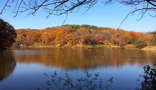 H湖の紅葉